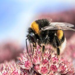 Elektrosmog Insektensterben